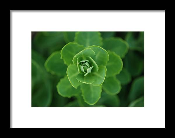 Landscape Framed Print featuring the photograph Sedum by Lisa Gabrius
