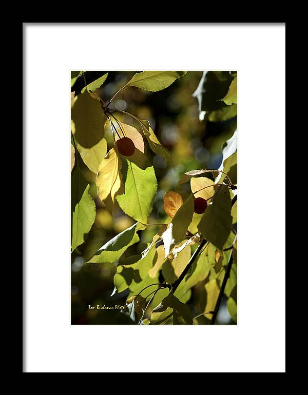 Seeds Framed Print featuring the photograph Seed Pods In The Fall by Tom Buchanan