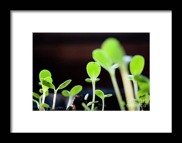 Beginnings Framed Print featuring the photograph Seeding Shoots Coming Up From The Ground by Sami Sarkis