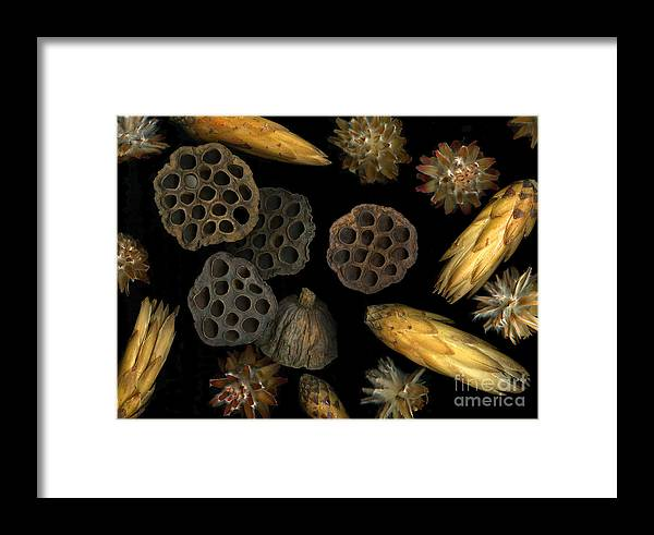 Pods Framed Print featuring the photograph Seeds And Pods by Christian Slanec