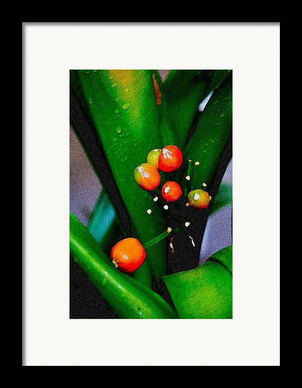 Flowers Framed Print featuring the digital art Seeds by John Toxey