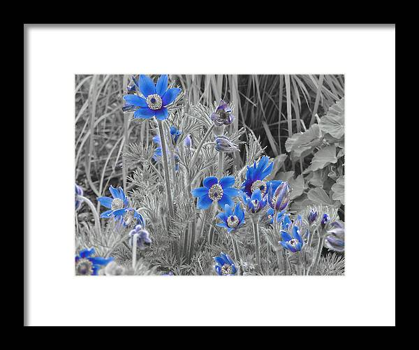 Blue Framed Print featuring the photograph Seeing Blue by Scott Ballingall