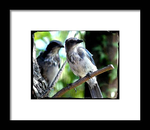 Bird Framed Print featuring the photograph Seeing Double by Ellen Lerner ODonnell