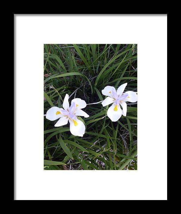 Flowers Landscape Florida Framed Print featuring the photograph Seeing Double by Warren Thompson