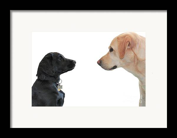 Vicki Framed Print featuring the photograph Seeing Eye To Eye by Vicki Spindler
