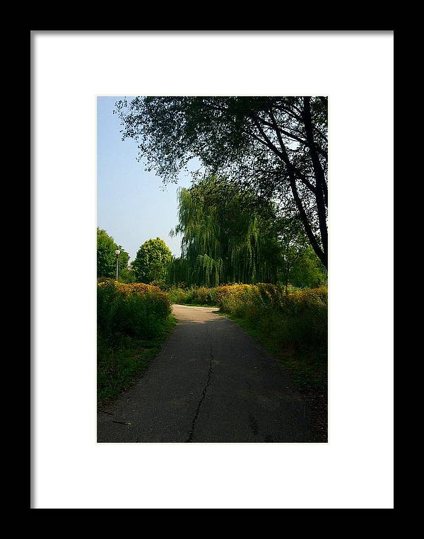 Weeping Willow Framed Print featuring the photograph Seeker by Margaret Fronimos