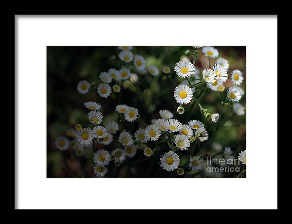 Miniature Framed Print featuring the photograph Seeking Sun by Jeannie Burleson