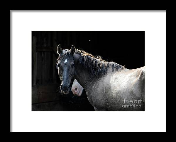 Rosemary Farm Sanctuary Framed Print featuring the photograph Senna by Carien Schippers