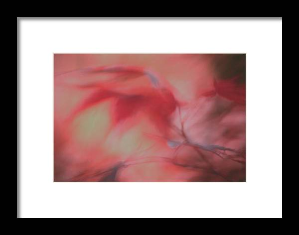 Leaves Framed Print featuring the photograph Sensa by Gary Bartoloni