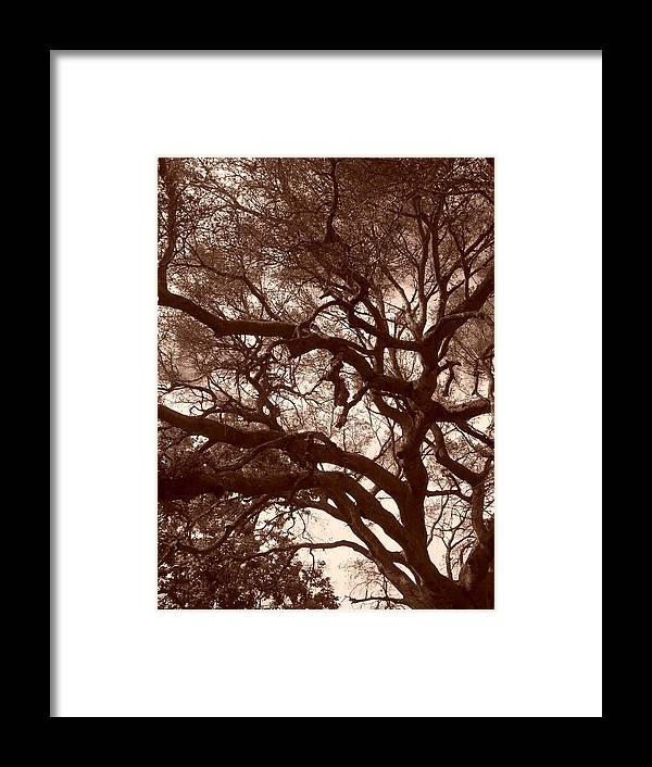 Sepia Framed Print featuring the photograph Sepia Branch Burst by Gwendolyn Barnhart