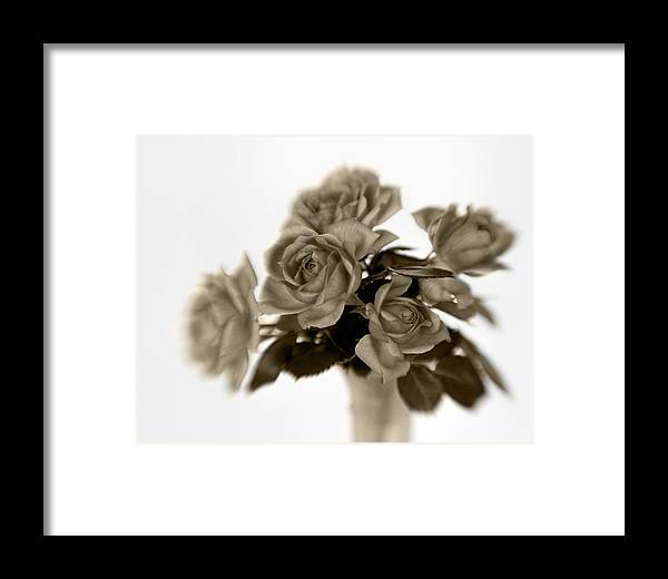 Bloom Framed Print featuring the photograph Sepia Roses by David and Carol Kelly