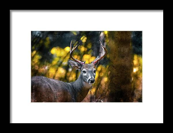 Deer Framed Print featuring the photograph 2016 Art Series #5 by Garett Gabriel