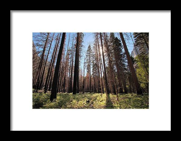 Sequoia National Park Framed Print featuring the photograph Sequoia Forest At Sunrise by Rick Pham
