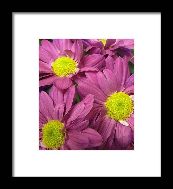 Flower Framed Print featuring the photograph Serendipity by Kimberly Morin
