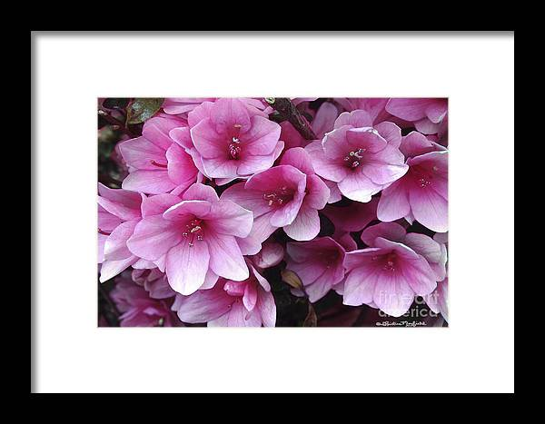 Flowers Framed Print featuring the mixed media Serene Beauty by Christine Mayfield