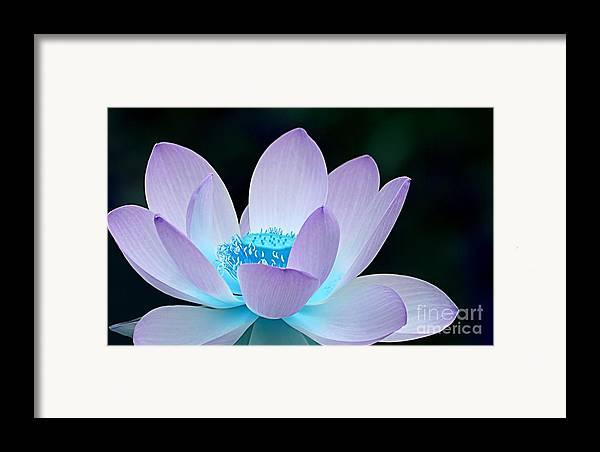 Flower Framed Print featuring the photograph Serene by Jacky Gerritsen