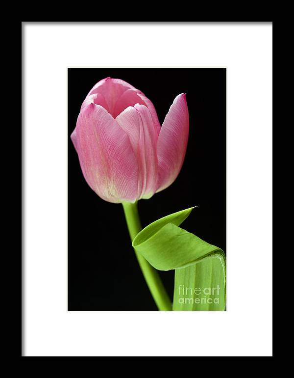 Wendy Framed Print featuring the photograph Seriously Pink 2 by Wendy Wilton