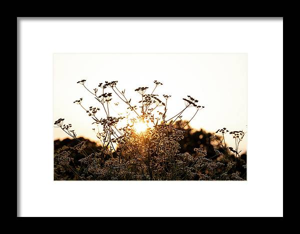 Backlit Framed Print featuring the photograph Setting Sun by Jeff Wilson
