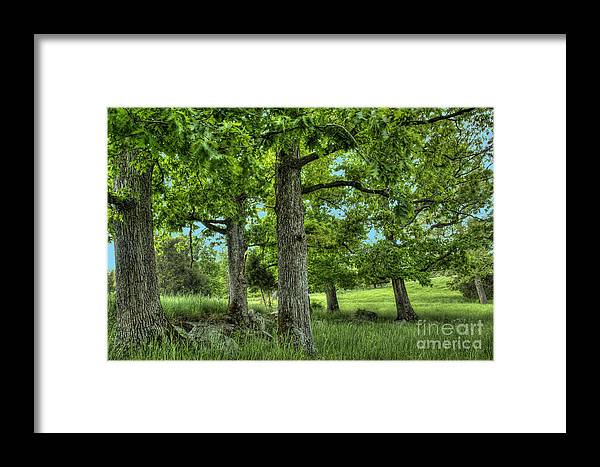 Peace Project Framed Print featuring the photograph Shade Trees by Pete Hellmann