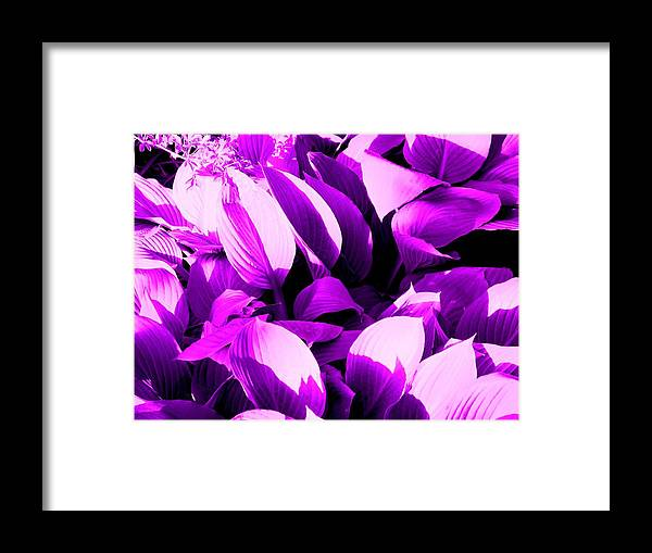 Leaves Framed Print featuring the photograph Shades by Ian MacDonald