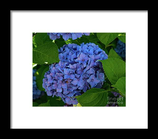 Annual Framed Print featuring the photograph Shades Of Blue by Joe Geraci