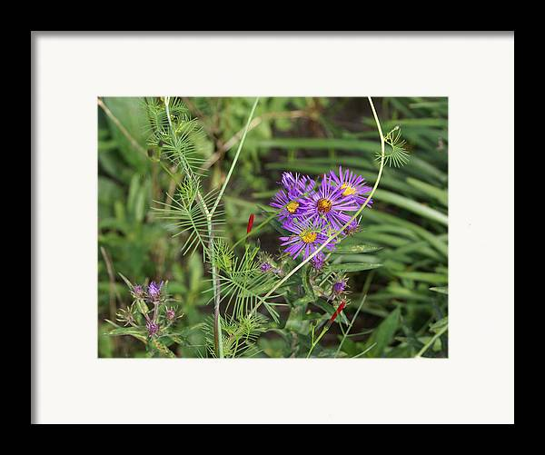 Floral Framed Print featuring the painting Shades Of Lavendar by Debbie May