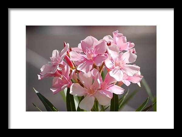 Flower Framed Print featuring the photograph Shades Of Pink by Susan Heller