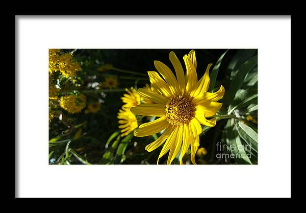 Framed Print featuring the photograph Shades Of Yellow by James Haynes