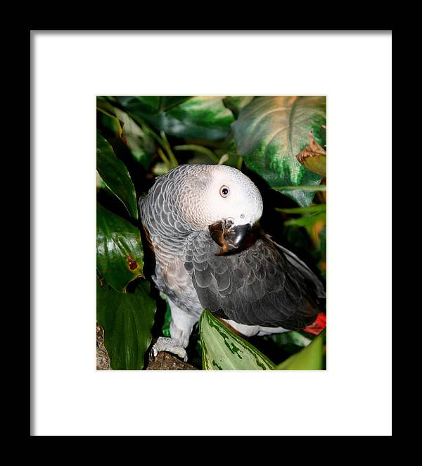 African Framed Print featuring the photograph Shadow by Diane Merkle