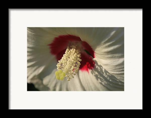 Flowers Framed Print featuring the photograph Shadow Lace by Alan Rutherford