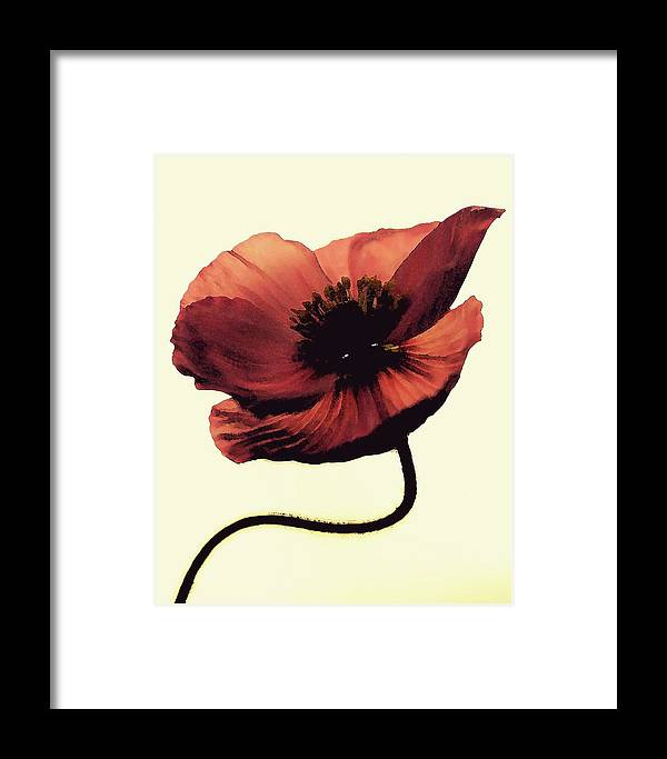 Poppy Framed Print featuring the photograph Shadow Poppy by Amy Neal