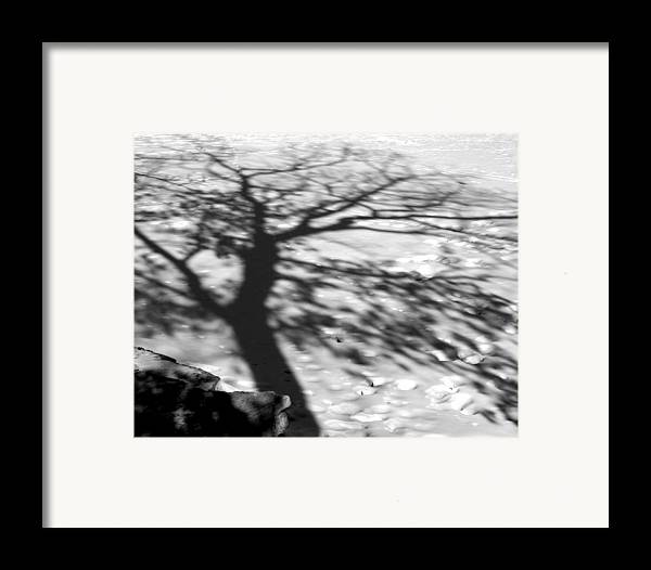 Shadow Framed Print featuring the photograph Shadow Tree Herrick Lake Naperville Illinois by Michael Bessler