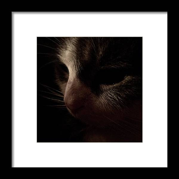 Cat Framed Print featuring the photograph Shadows Of A Cat by Taylor McClish