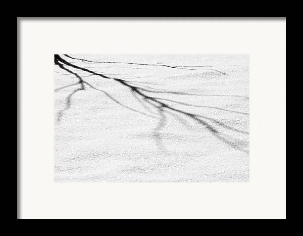 Branches Framed Print featuring the photograph Shadows Of Winter by Christine Till