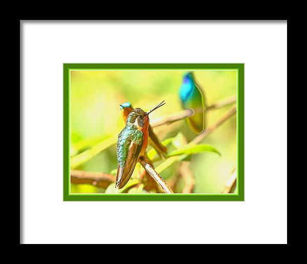 Hummingbirds Framed Print featuring the photograph Sharing by BYETPhotography