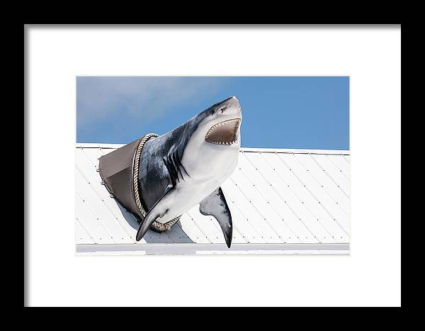 Key Largo Framed Print featuring the photograph Shark Attack by Art Block Collections
