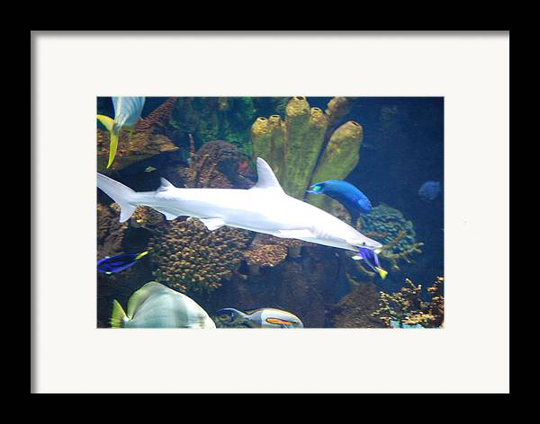 Nature Framed Print featuring the photograph Shark Bait by Peter McIntosh
