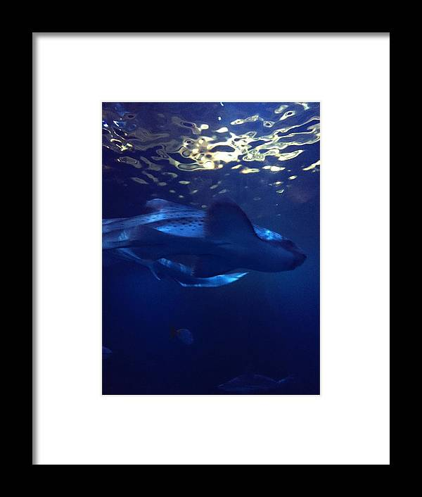 Marine Framed Print featuring the photograph Shark In The Sunlight by Valerie Nolan