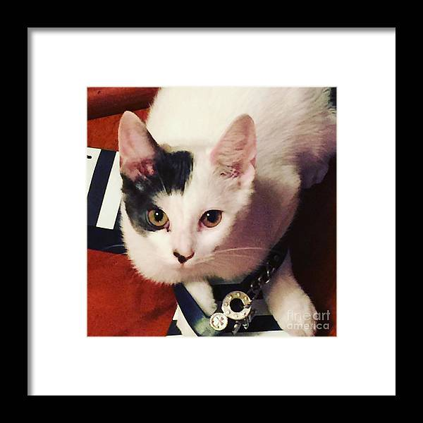 Shoes Framed Print featuring the photograph Sharky Is Shoe Cat by Buffy Heslin