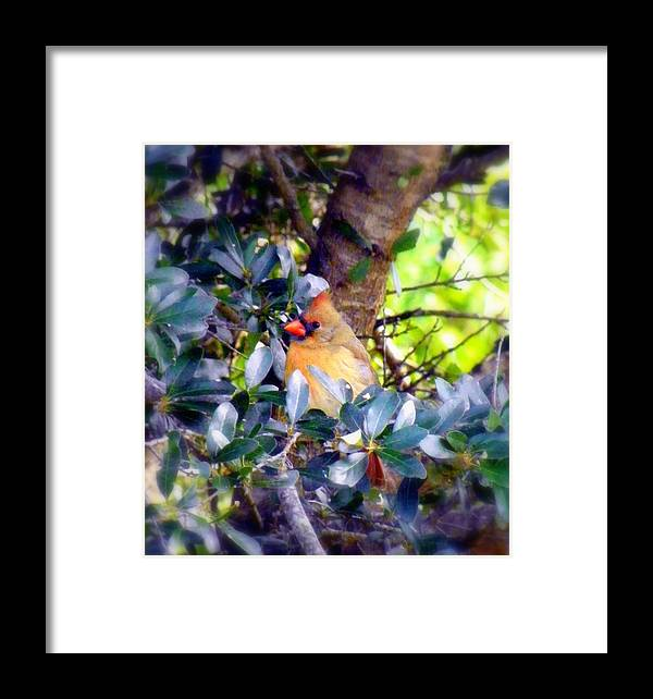 Cardinal Framed Print featuring the photograph She Waits by Karen Wiles