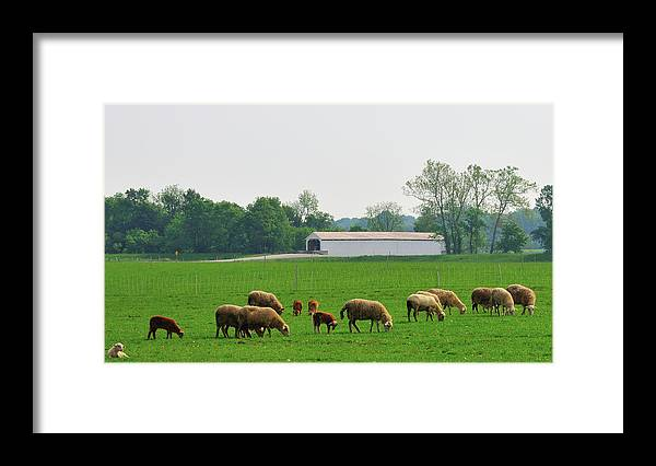 Bridge Framed Print featuring the photograph Sheep And Covered Bridge by David Arment