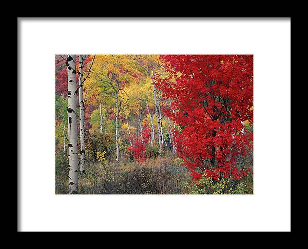 Idaho Scenics Framed Print featuring the photograph Sheep Canyon In Autumn by Leland D Howard
