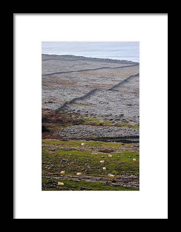 Sheep Framed Print featuring the photograph Sheep In The Burren Ireland by Pierre Leclerc Photography