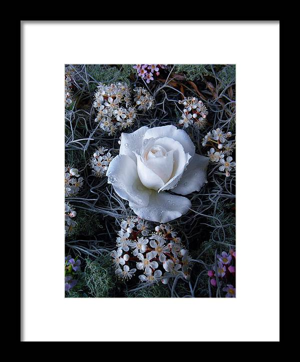 Framed Print featuring the mixed media Sheer Delight Of Being by Alison Lee Cousland