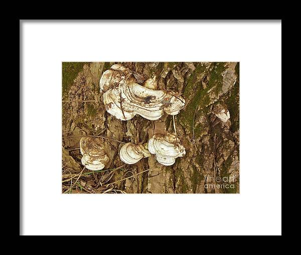 Shelf Fungi On Live Oak Spring Indiana Framed Print