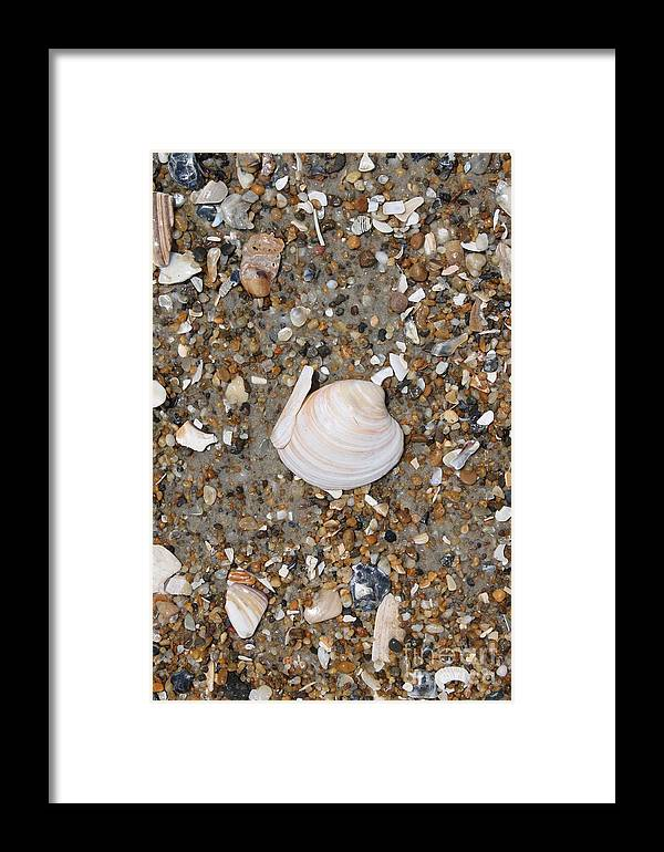 Beach Framed Print featuring the photograph Shell 1 by Marcie Daniels