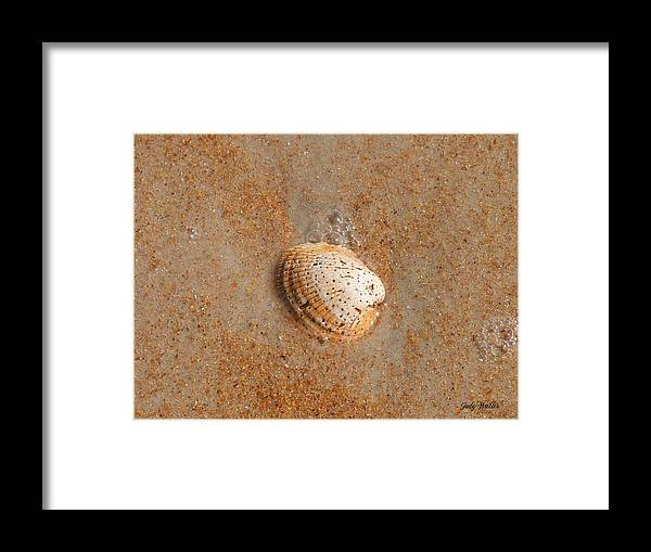 Beach Framed Print featuring the photograph Shell by Judy Waller