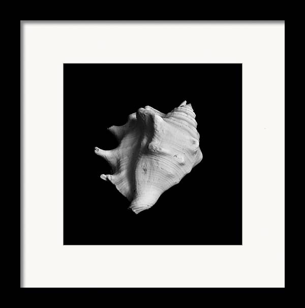 Seashell Framed Print featuring the photograph Shell No. 2 by Henry Krauzyk
