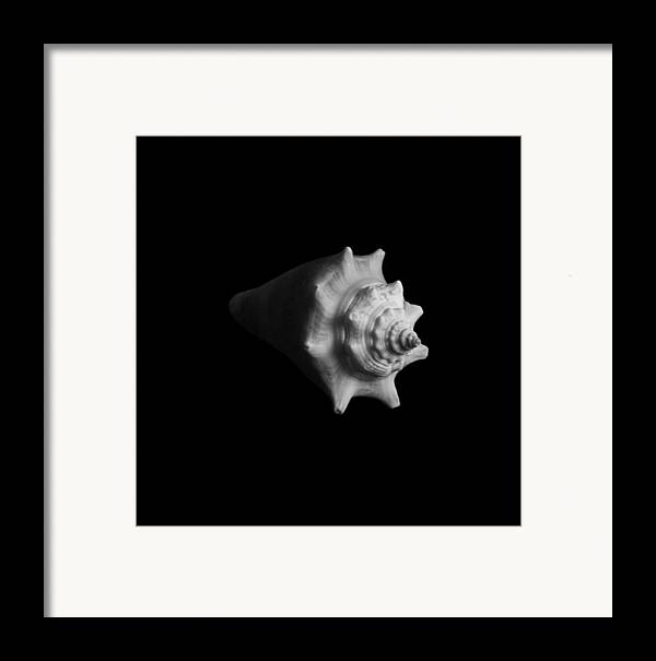 Seashell Framed Print featuring the photograph Shell No. 4 by Henry Krauzyk
