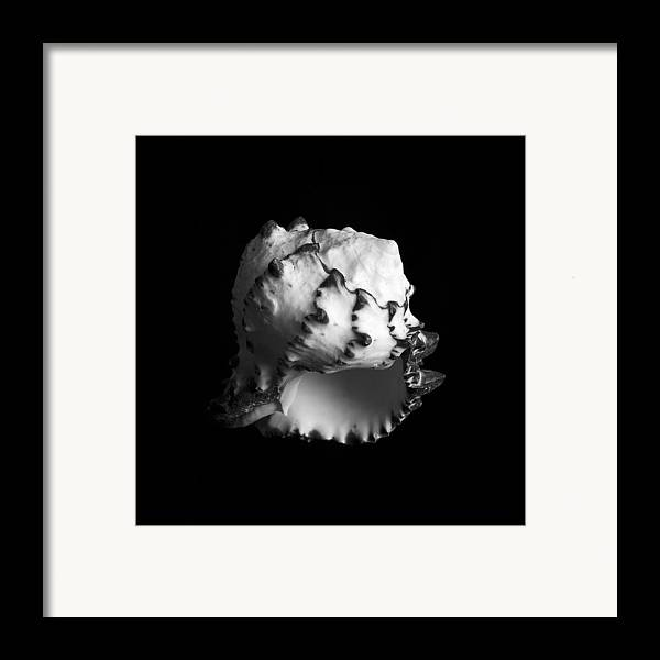 Sea Framed Print featuring the photograph Shell No. 7 by Henry Krauzyk